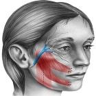 פציאליס: כיצד מטפלים בשיתוק בעצב הפנים?