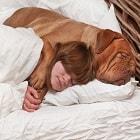 הפרעות שינה: למה כדאי לישון עם הכלב?